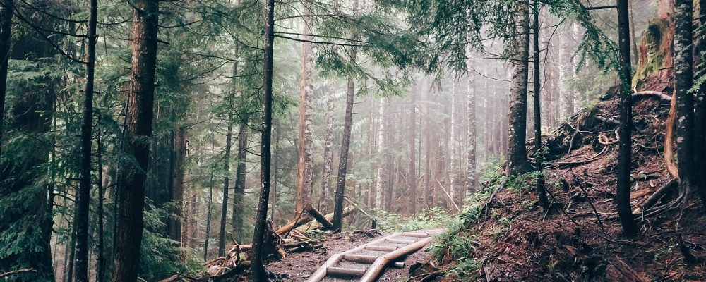 path-in-the-woods-1-2-1000x400