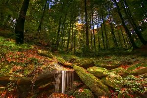 Autumn colors with waterfall and leaves