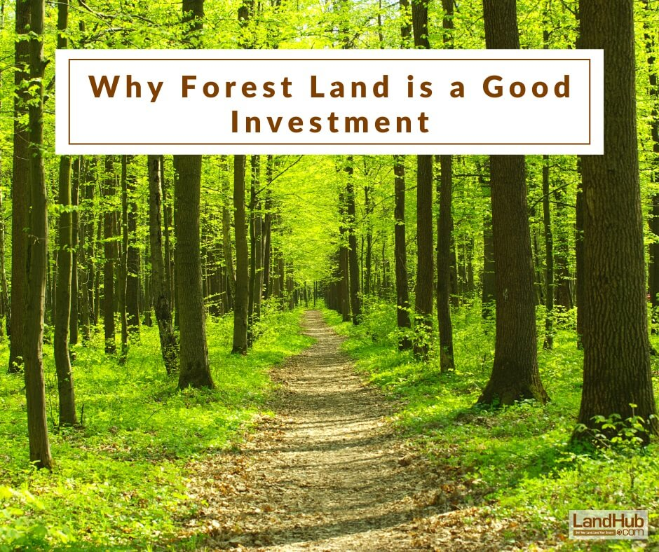 Why Forest Land Is A Good Investment Landhub