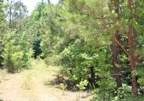 Lot 9 Hickory Hill Ranch ,BATH springs,Tennessee 38311,Lot 9 Hickory Hill Ranch,112093