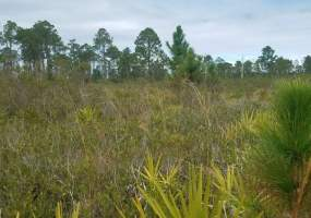 Holopaw Groves Road,Holopaw,Florida 34771,Holopaw Groves Road,126425