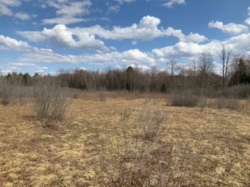 Albion Cross Rd, Albion, New York 13131, ,Hunting Land,For Sale,Albion Cross Rd,199851