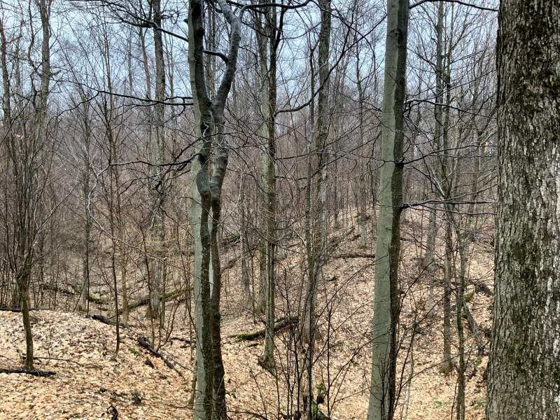 Pond Hill Rd, Annsville, New York 13471, ,Hunting Land,For Sale,Pond Hill Rd,200117