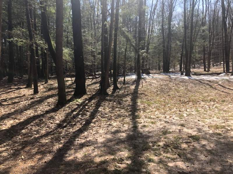Creekview Dr, Vienna, NY 13308, Vienna, New York 13308, ,Waterfront,For Sale, Creekview Dr, Vienna, NY 13308,200119