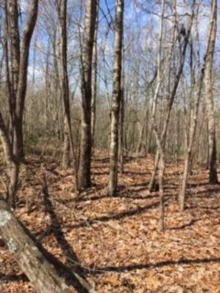 Wilder, Tennessee 38589, ,Land - Forest - Natural,For Sale,205199