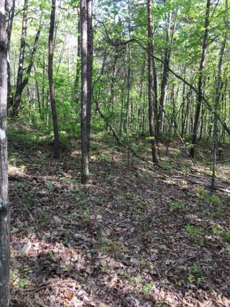 Wilder, Tennessee 38589, ,Land - Forest - Natural,For Sale,216121
