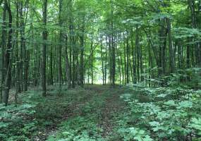 Orebed Rd, De Kalb, New York 13630, ,Hunting Land,Under Contract,Orebed Rd,236618