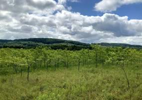 Earlville Rd, Hamilton, New York 13346, ,Land - Forest - Planted,For Sale,Earlville Rd,246058