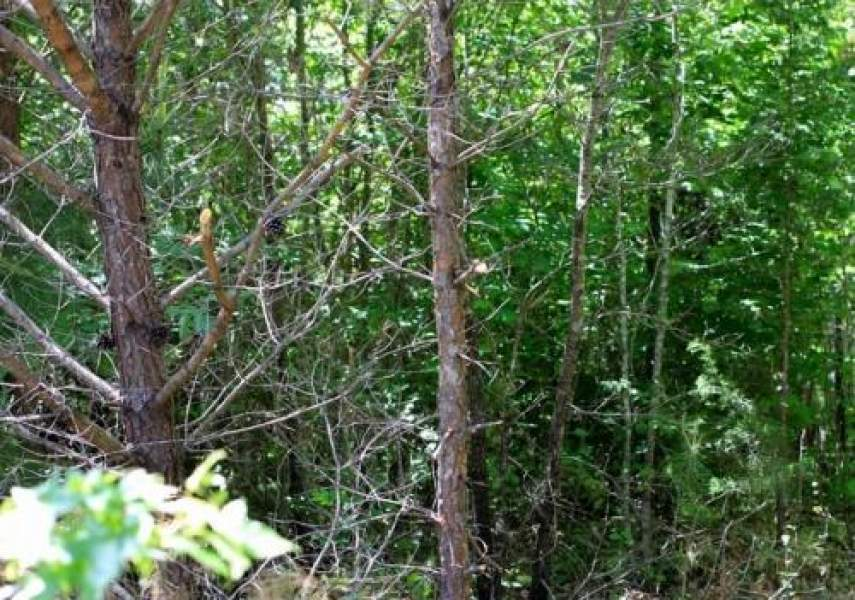 Lot 8 Hickory Hill Ranch,Bath Springs,Tennessee 38311,Lot 8 Hickory Hill Ranch,4524